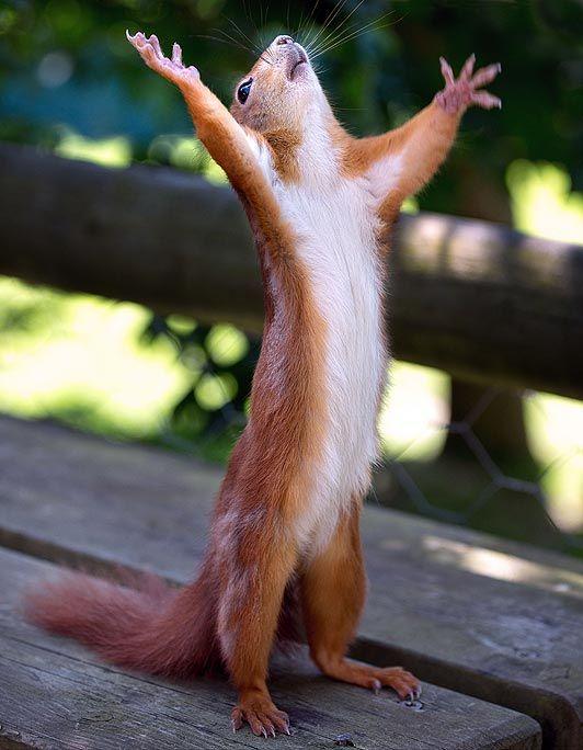 squirell_praying